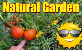 summer garden fertilizer organic