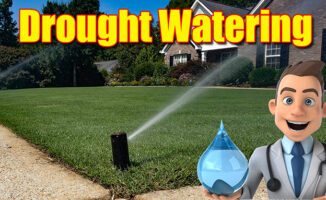 summer lawn drought watering