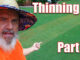 thinning your lawn