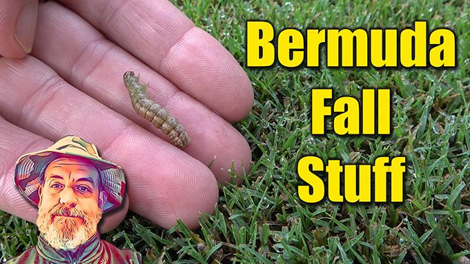 fall bermuda lawn products