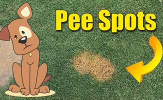 fix lawn dog pee spots